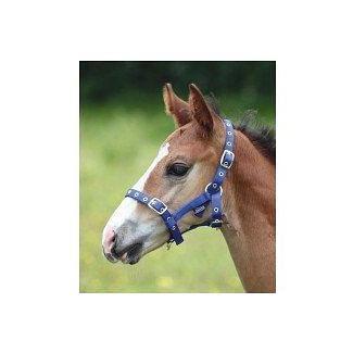 Shires Foal Nylon Headcollar